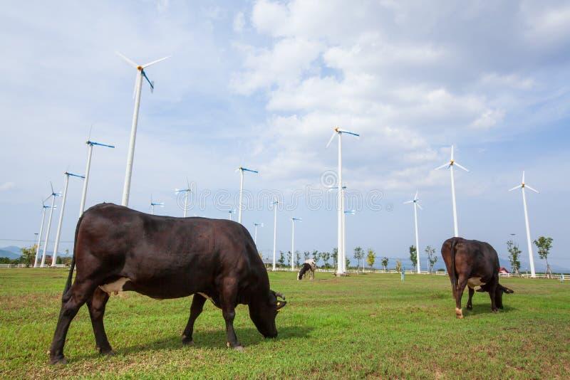 Cultivo de los ecosistemas Turbinas de viento o generadores de viento en el cultivo, imagenes de archivo