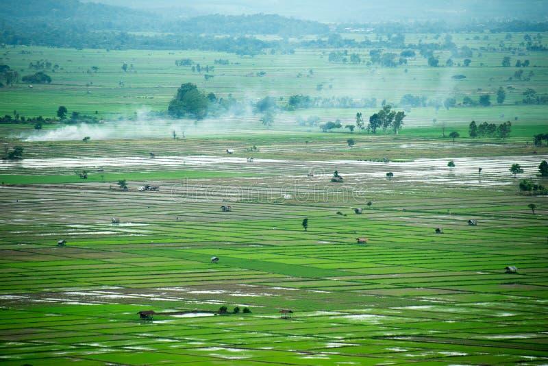 Cultivo del arroz de Viewscape y área cultivada en Tailandia fotografía de archivo libre de regalías