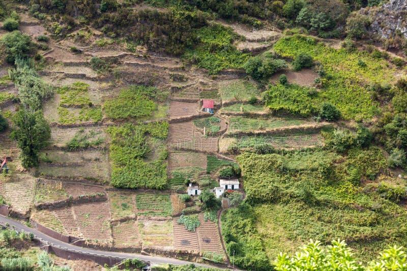 Cultivo del pueblo y de la terraza en los alrededores del sao Vicente Costa del norte de la isla de Madeira imagenes de archivo