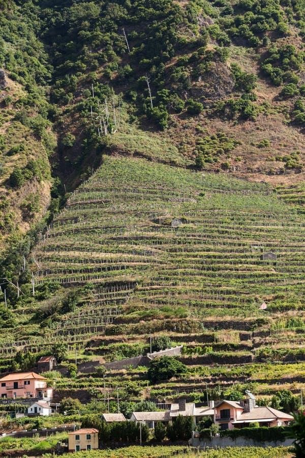 Cultivo del pueblo y de la terraza en los alrededores del sao Vicente Costa del norte de la isla de Madeira, foto de archivo