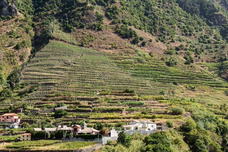 Cultivo del pueblo y de la terraza en los alrededores del sao Vicente Costa del norte de la isla de Madeira, imagenes de archivo