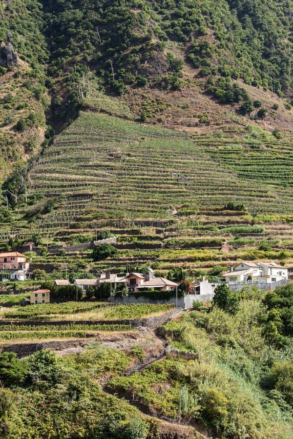 Cultivo del pueblo y de la terraza en los alrededores del sao Vicente Costa del norte de la isla de Madeira, fotos de archivo libres de regalías