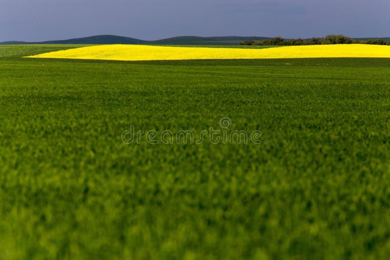 Cultivo do campo de Saskatchewan imagens de stock royalty free