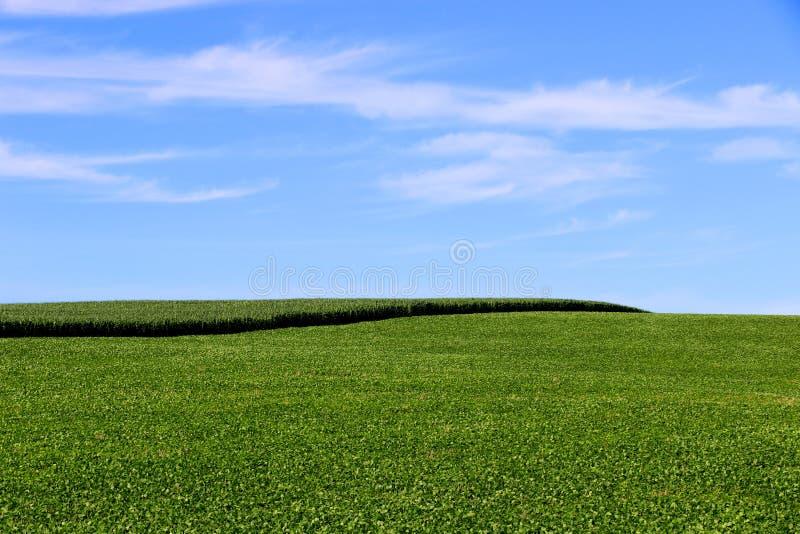 Cultivo do feijão de soja e do milho no sul de Brasil Campos verdes bonitos que crescem de lado a lado com céu azul como um fundo fotografia de stock