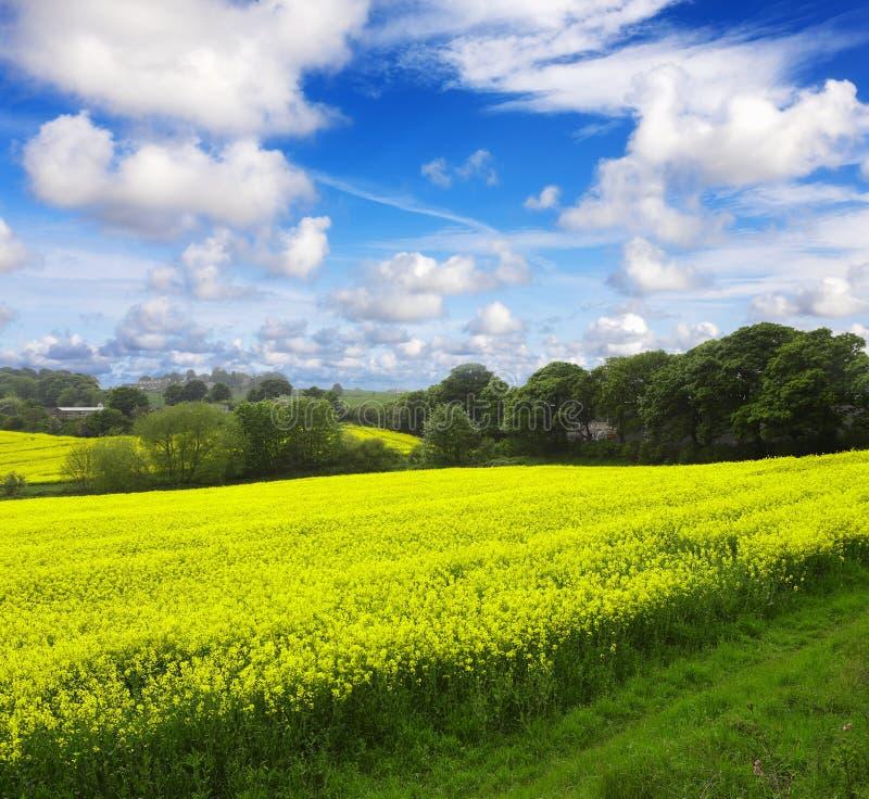 Cultivo ecológico imagem de stock royalty free
