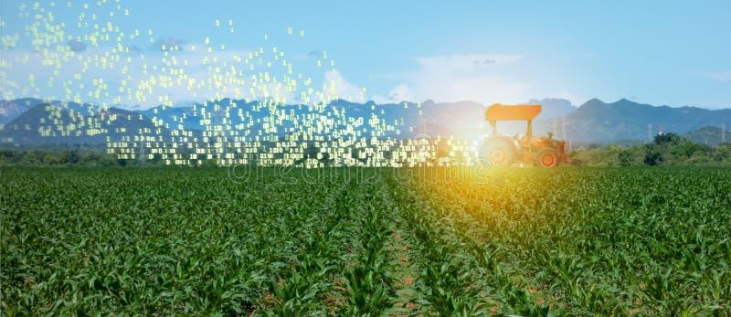 Cultivo elegante de Iot, agricultura en la industria 4 0 tecnologías con concepto de la inteligencia artificial y del aprendizaje imagen de archivo