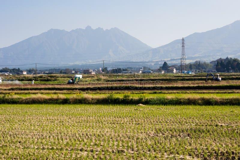 Cultivo em campos do arroz dentro do caldera vulcânico de Aso imagem de stock