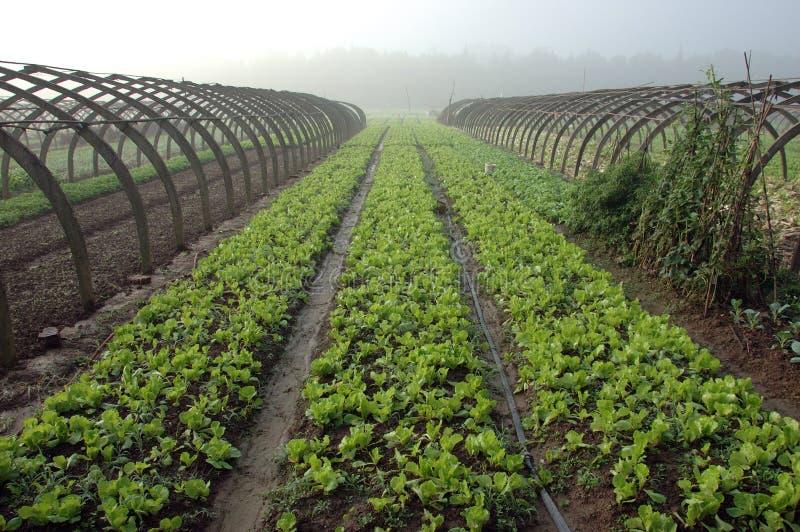 Cultivo em China foto de stock royalty free
