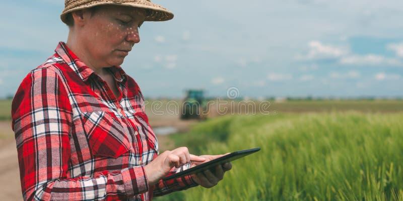 Cultivo esperto responsável, usando a tecnologia moderna no agricultur foto de stock