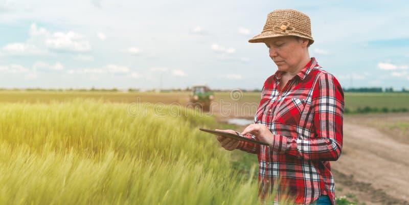 Cultivo esperto, usando a tecnologia moderna na atividade agrícola fotos de stock royalty free