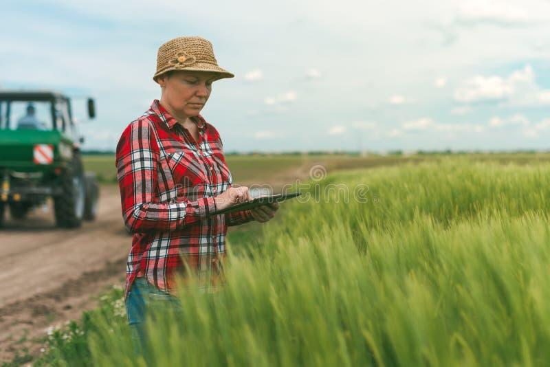 Cultivo esperto, usando a tecnologia moderna na atividade agrícola fotografia de stock