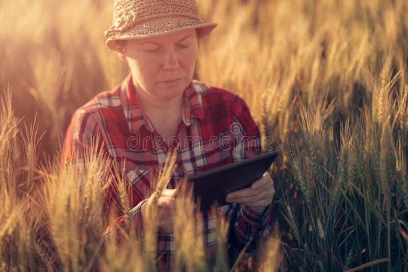 Cultivo esperto, usando tecnologias modernas na agricultura foto de stock royalty free