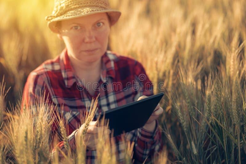 Cultivo esperto, usando tecnologias modernas na agricultura imagem de stock