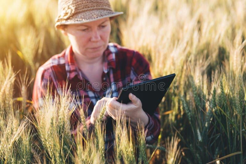 Cultivo esperto, usando tecnologias modernas na agricultura fotografia de stock royalty free
