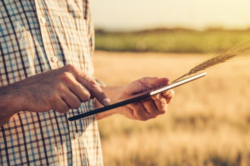 Cultivo esperto, usando tecnologias modernas na agricultura imagem de stock royalty free