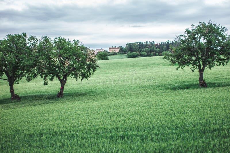 Cultivo no campo nos montes italianos fotografia de stock royalty free