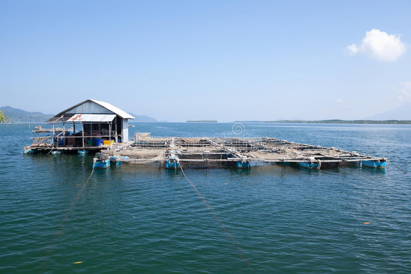 Cultivo subacuático de la jaula de los pescados de los pescados foto de archivo libre de regalías