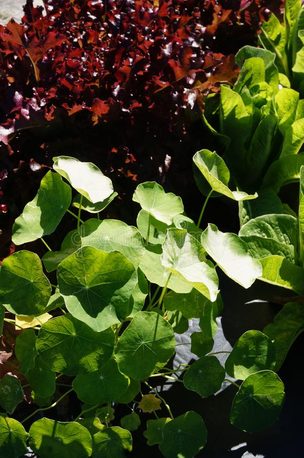 Cultivo sustentável em Florida sul foto de stock royalty free