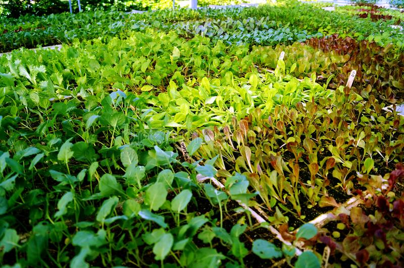 Cultivo sustentável em Florida sul imagem de stock royalty free