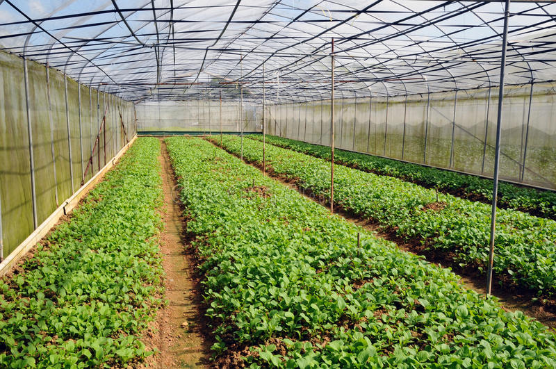 Cultivo vegetal imagen de archivo