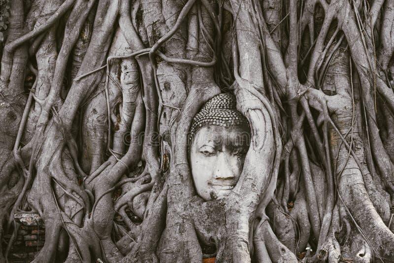 Culto della Tailandia, statua di Buddha, storia della Tailandia immagini stock libere da diritti