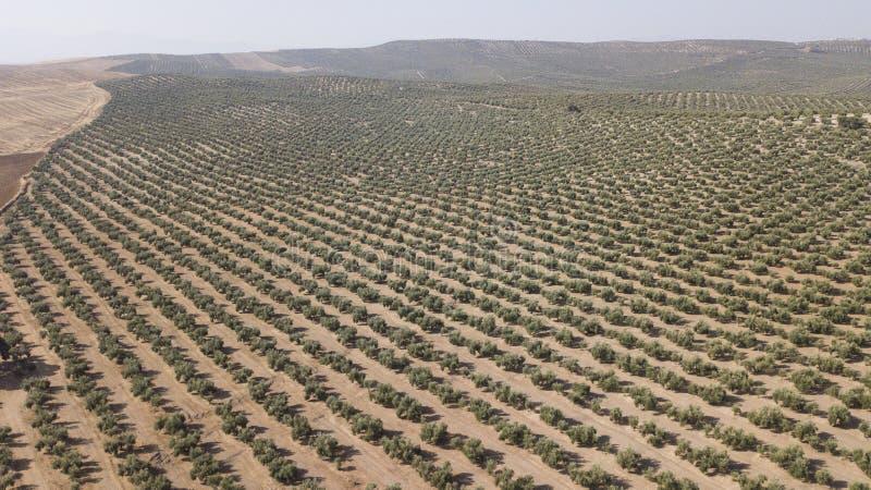 Culture ?cologique des oliviers dans la province de Jaen images stock