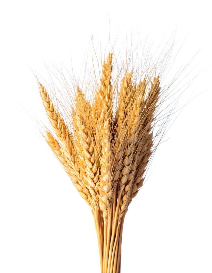 Culture de blé photographie stock libre de droits