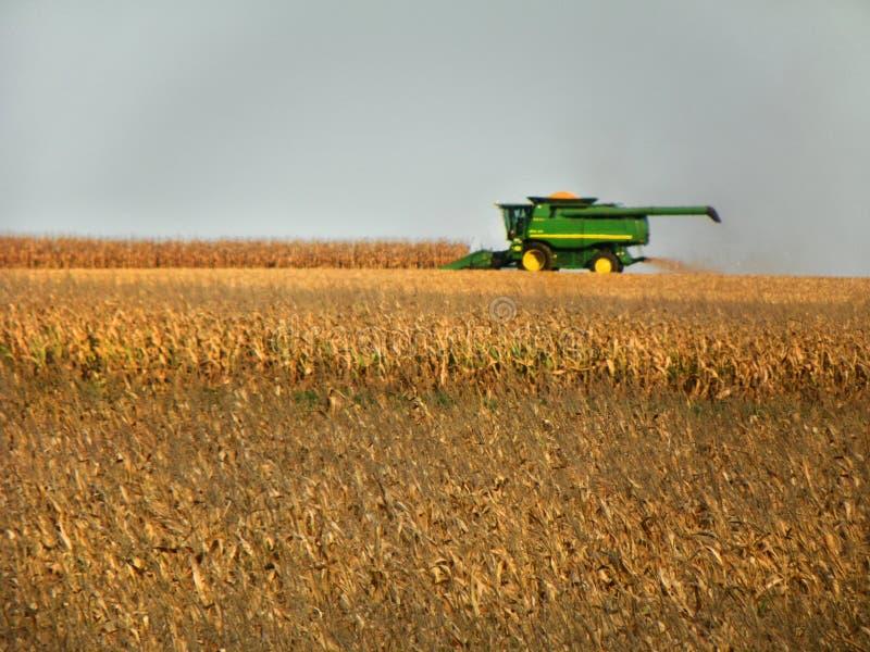 Culture de chute de récolte mécanisée de maïs dans l'état de New-York image libre de droits
