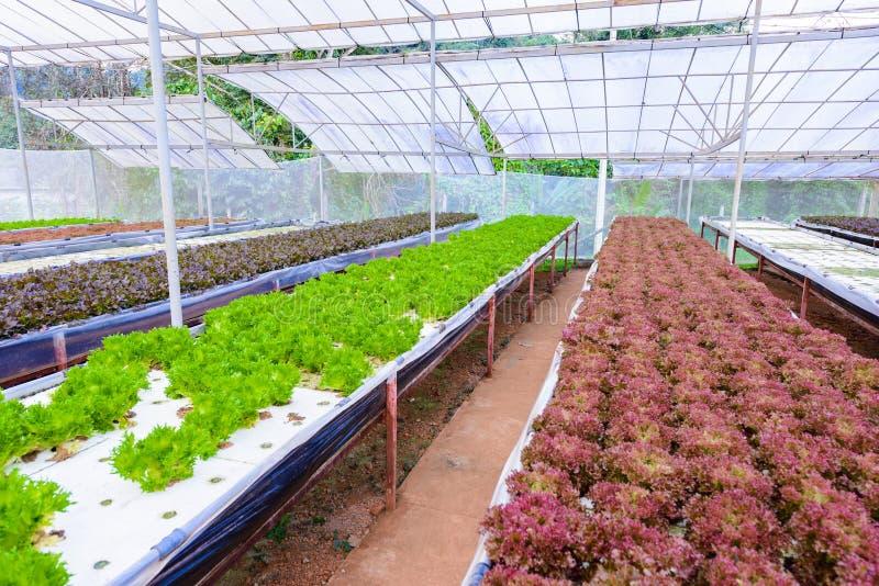 Culture de légumes avec le système de jardinage hydroponique photographie stock