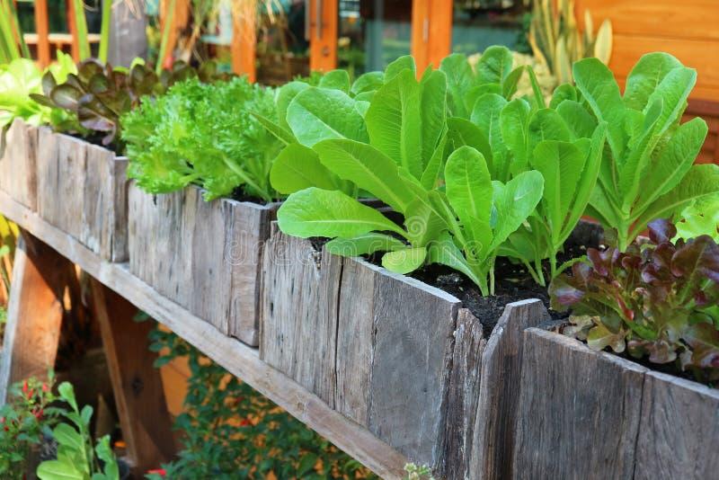 Culture de légumes d'arrière-cour dans les conteneurs en bois photos stock