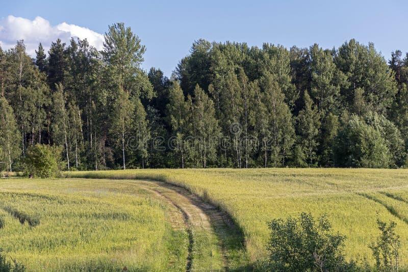 Culture de légumes dans le jardin de permaculture, paysage traditionnel de campagne images stock