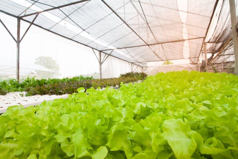 Culture de légumes de culture hydroponique dans le tuyau de culture hydroponique Agriculture moderne images libres de droits