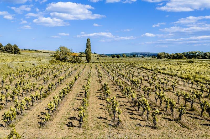 Culture des vignobles près des Frances de Narbonne image libre de droits