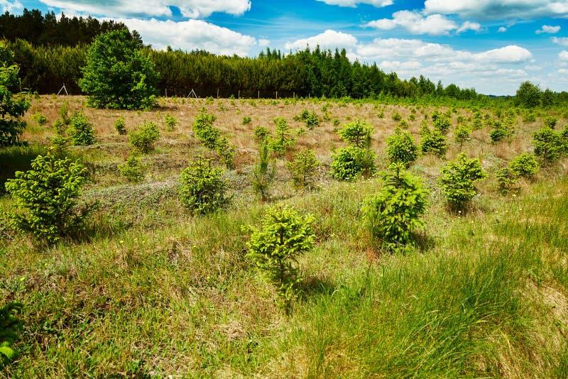 Culture naturelle de jeunes arbres impeccables au beau milieu d'herbe verte École maternelle photos libres de droits