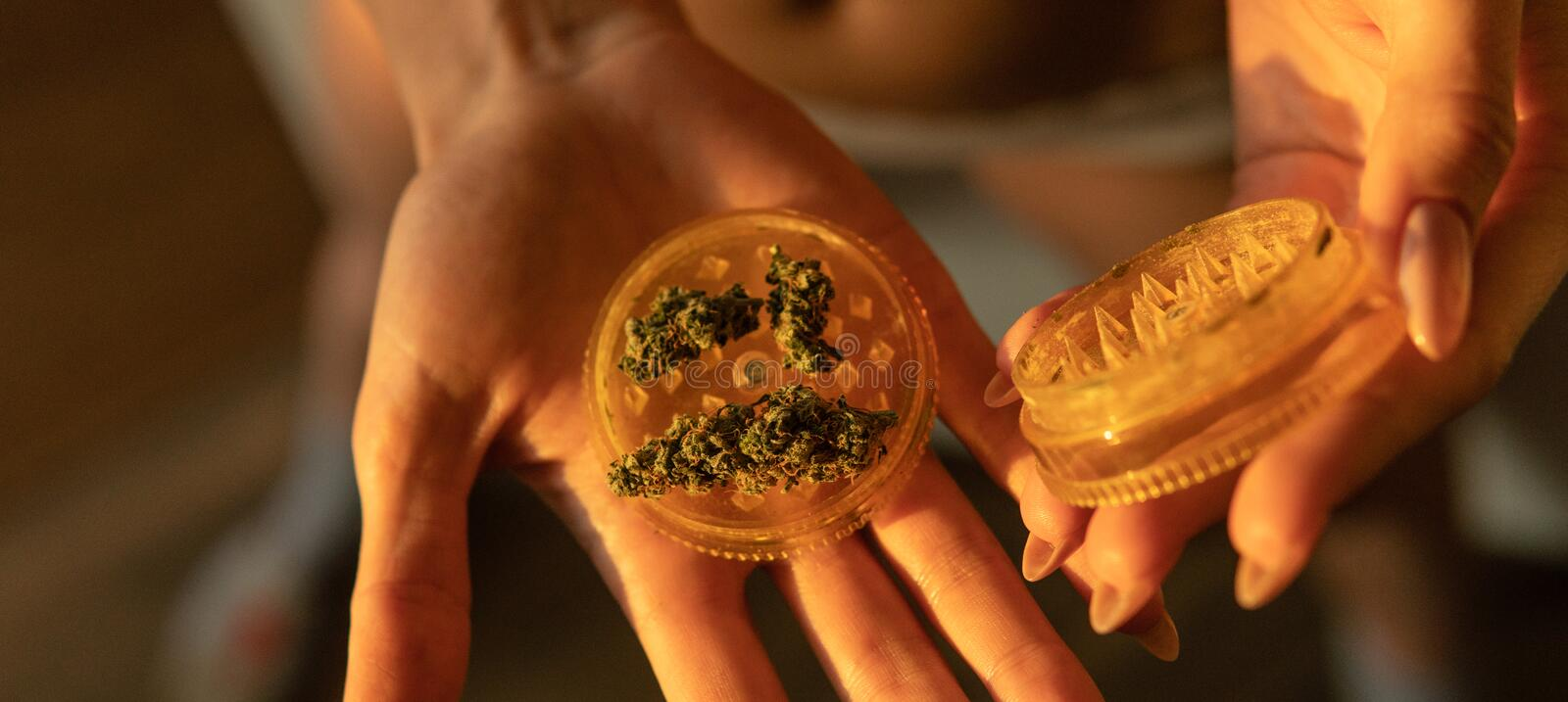 Marijuana buds in woman hands close-up. Culture of smoking marijuana in the world. Ready medical THC CBD cannabis buds  for smoking royalty free stock photography