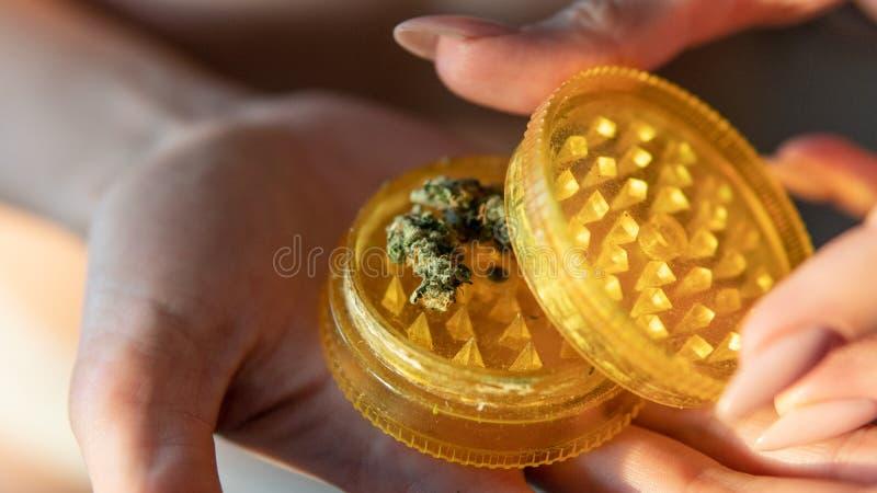 Marijuana buds in woman hands close-up. Culture of smoking marijuana in the world. Ready medical THC CBD cannabis buds for smoking stock photography