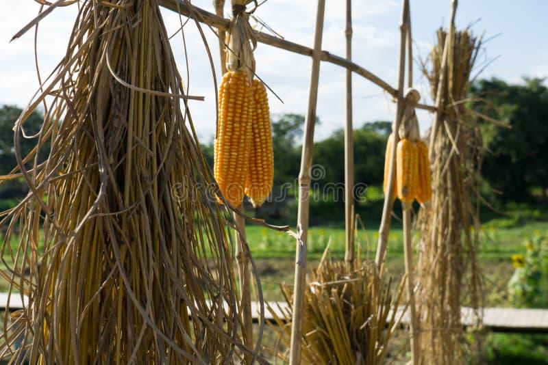 Culture thaïlandaise dans la ferme photo stock