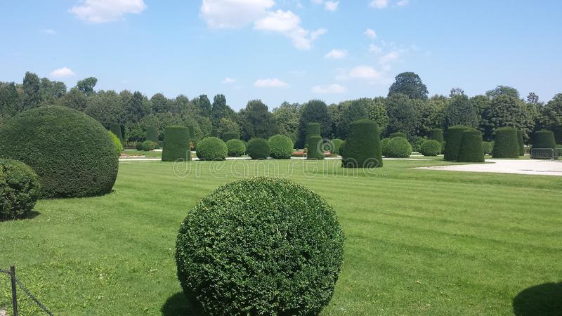Cultured Garden. With round trees royalty free stock image