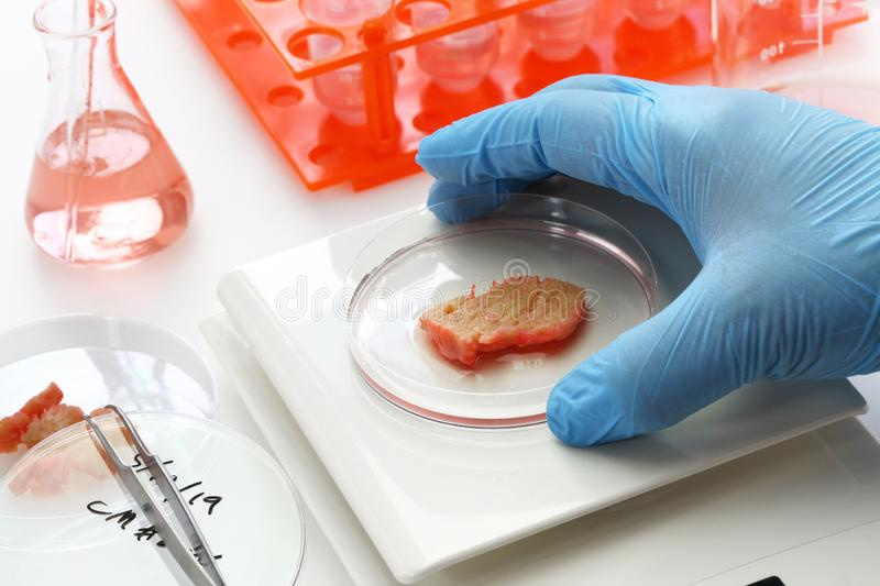 Cultured meat making image. Lab grown meat concept royalty free stock photo
