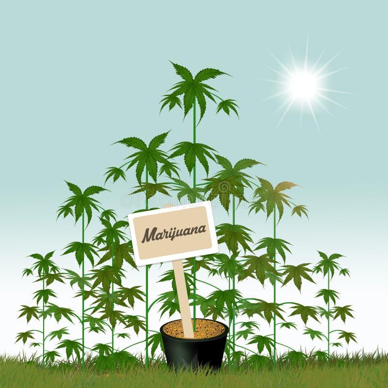 Cultures de cannabis illustration de vecteur