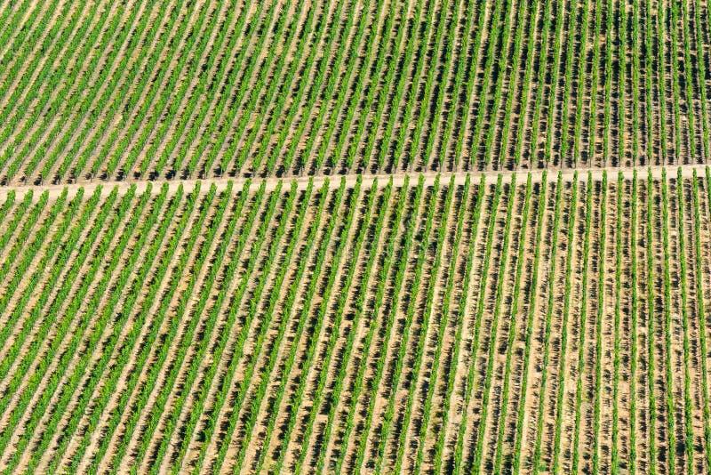 Cultures de vin photos stock