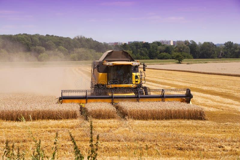 Cultures mûres de blé de recolte mécanique de moissonneuse de cartel images libres de droits