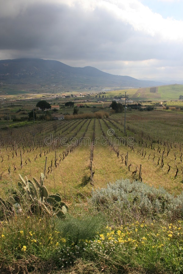 Cultuur & onderstel 22 van wijngaarden stock foto's