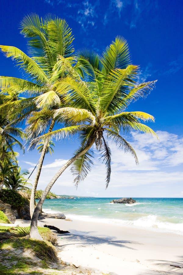 Cumanabaai, Trinidad stock afbeelding