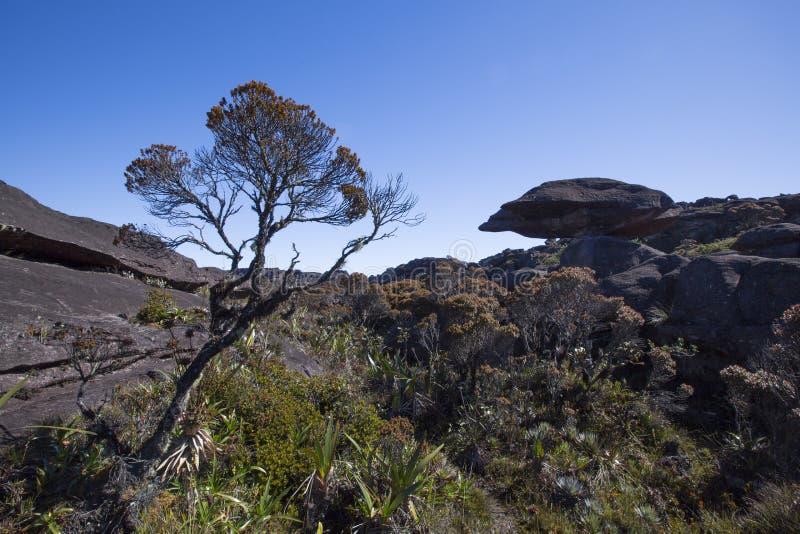 Cumbre del soporte Roraima, mundo hecho del st volcánico extraño del negro imagen de archivo libre de regalías