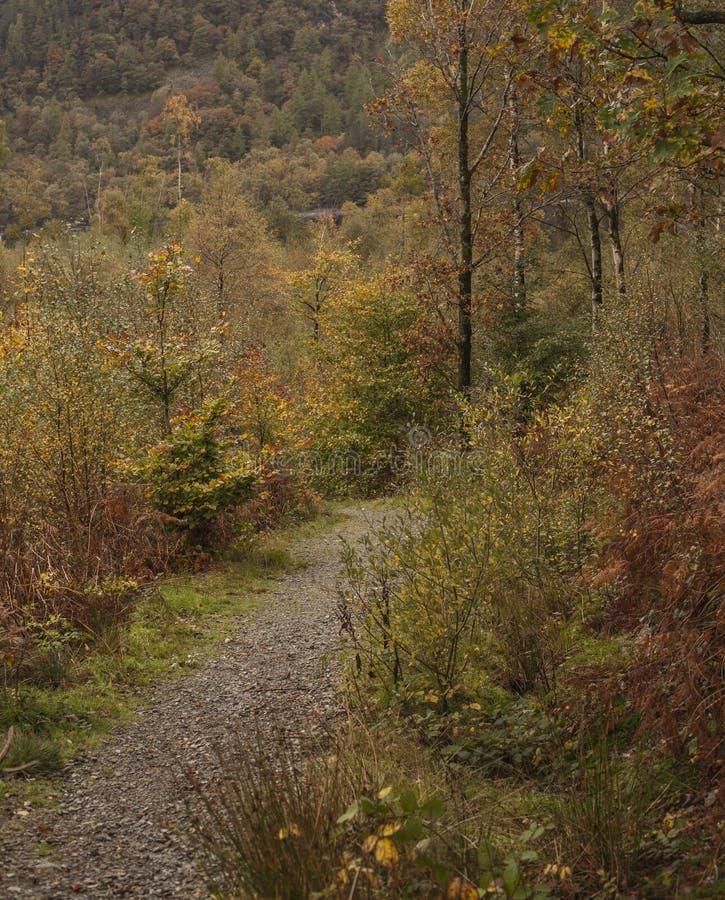 Cumbria, περιοχή λιμνών, Αγγλία - μια πορεία σε ένα δάσος στοκ φωτογραφία