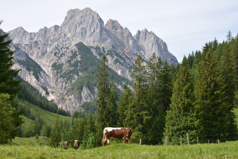 Cumes bávaros imagens de stock royalty free