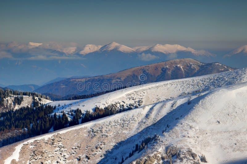 Cumes nevado e montanhas Carpathian Eslováquia de Fatra da madeira de pinho imagens de stock royalty free