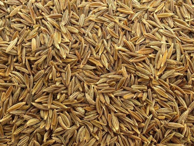 Cumin Seeds royalty free stock photography