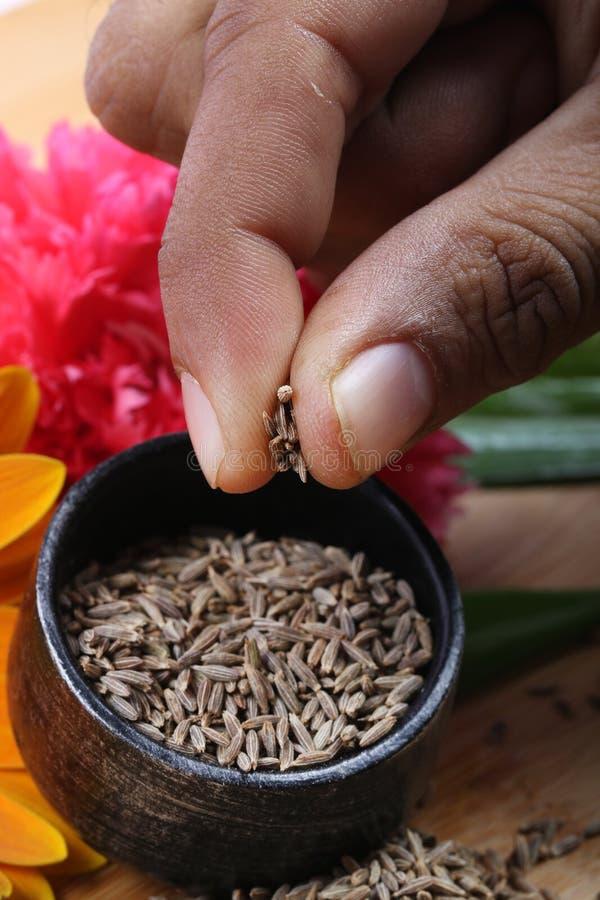 Cumin seeds. Beautiful shot of cumin seeds in bowl stock images